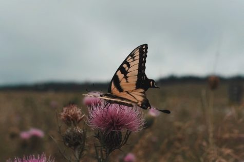 nature shot of a butterfly